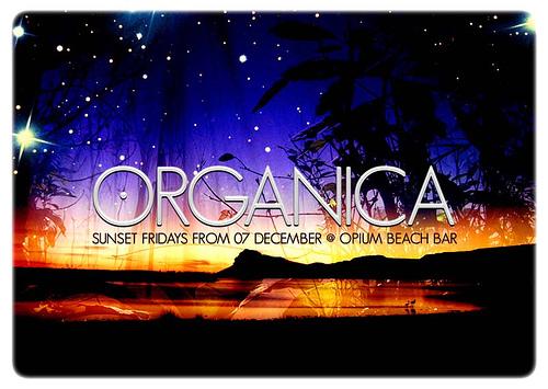 Night Club Flyer - December Sunset Fridays at Beach Bar