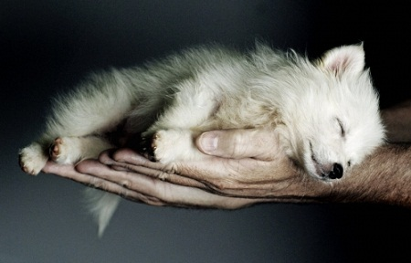 pictures of cute baby animals - sleeping puppy