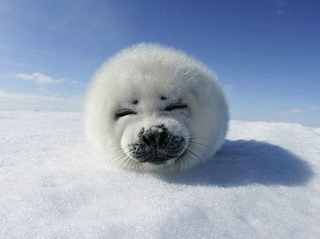 pictures of cute baby animals - seal of approval