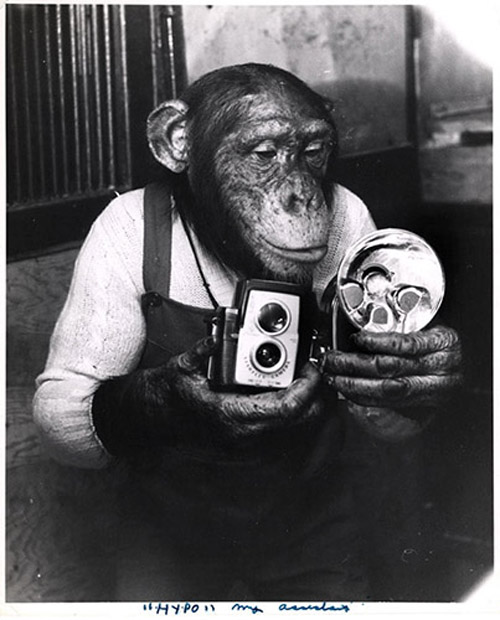 Old Pictures of New York - chimp