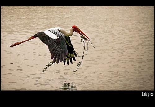 High Speed Photos - bird