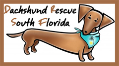 Dachshund Rescue South Florida Logo