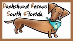 Dachshund Rescue South Florida Logo