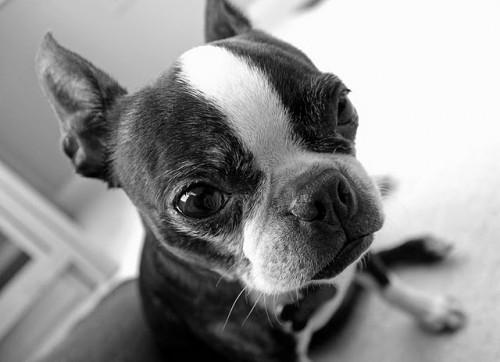 Dog-Photography-07