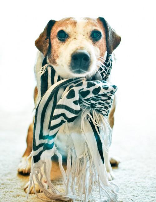 Dog-Photography-08