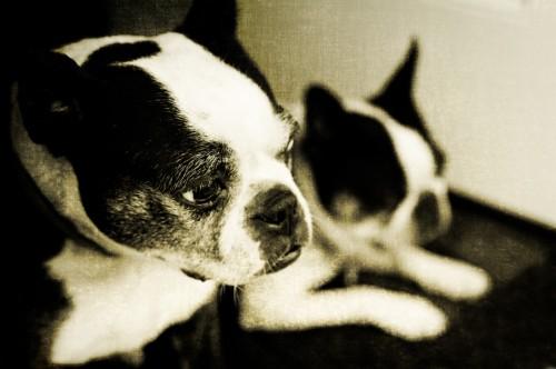 Dog-Photography-09