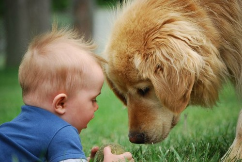 Dog-Photography-10