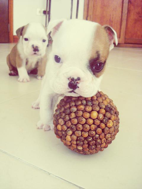 Dog-Photography-11
