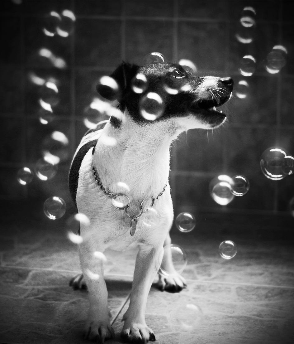 Dog-Photography-12