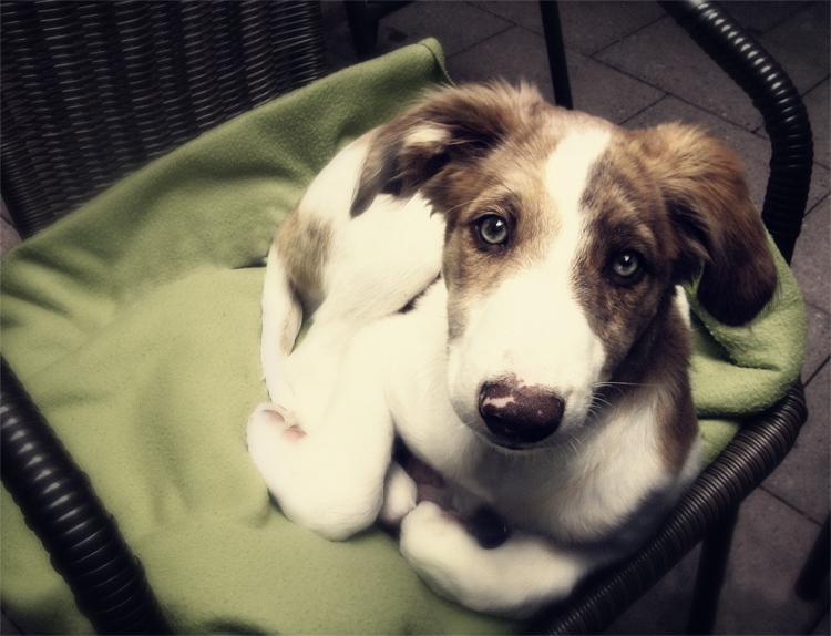 Dog-Photography-14
