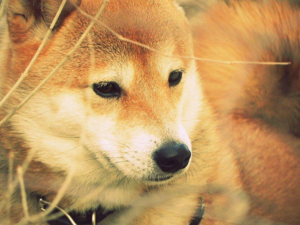 Dog-Photography-15
