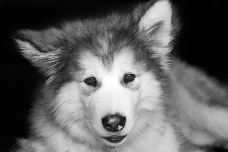 Dog-Photography-16