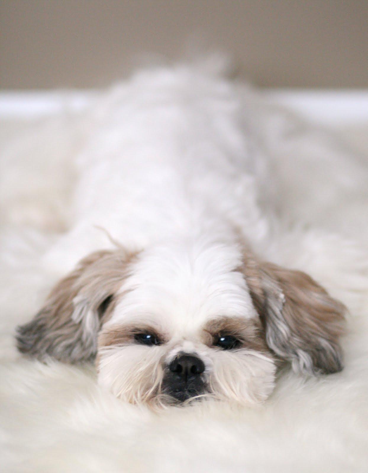 Dog-Photography-18