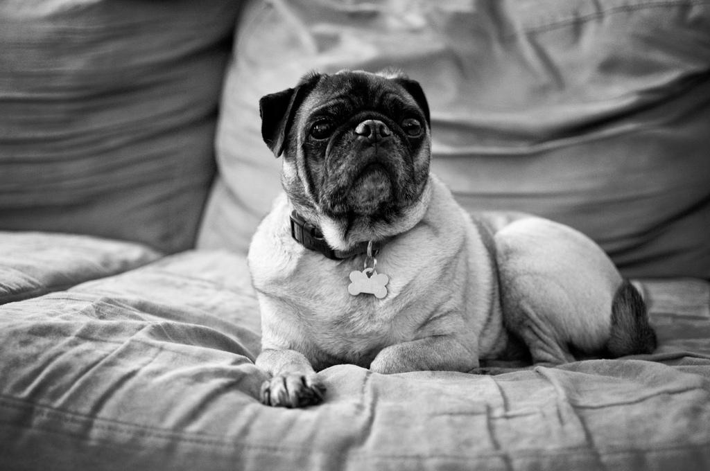 Dog-Photography-19