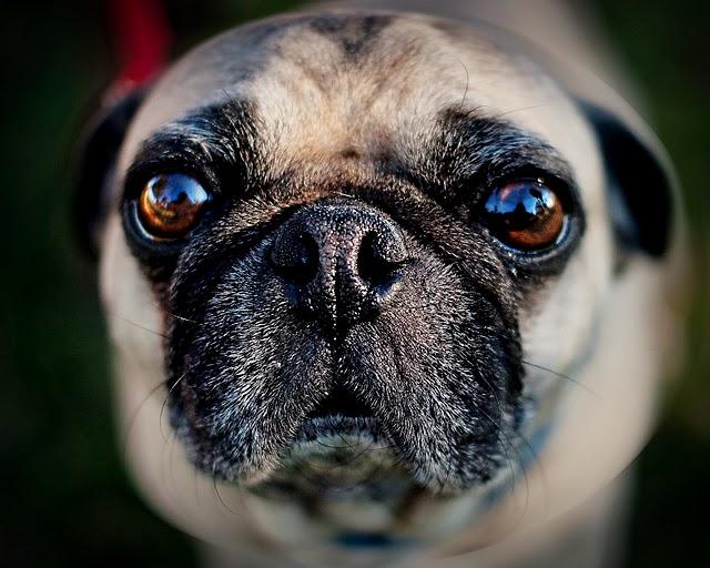 Dog-Photography-22