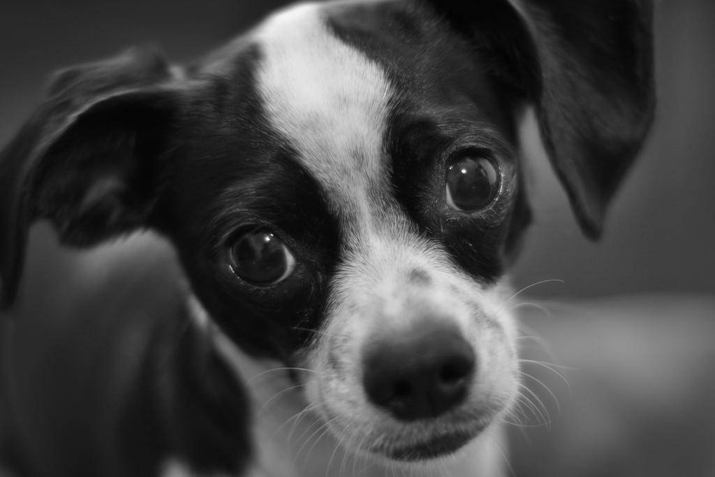 Dog-Photography-25