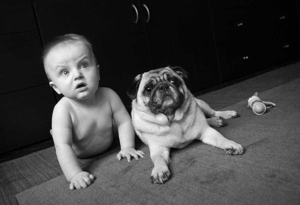 Dog-Photography-27
