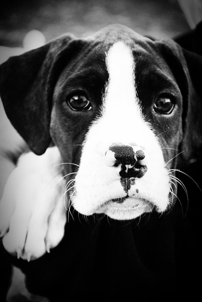 Dog-Photography-28
