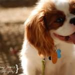 Dog Photography for Postcard Design Inspiration