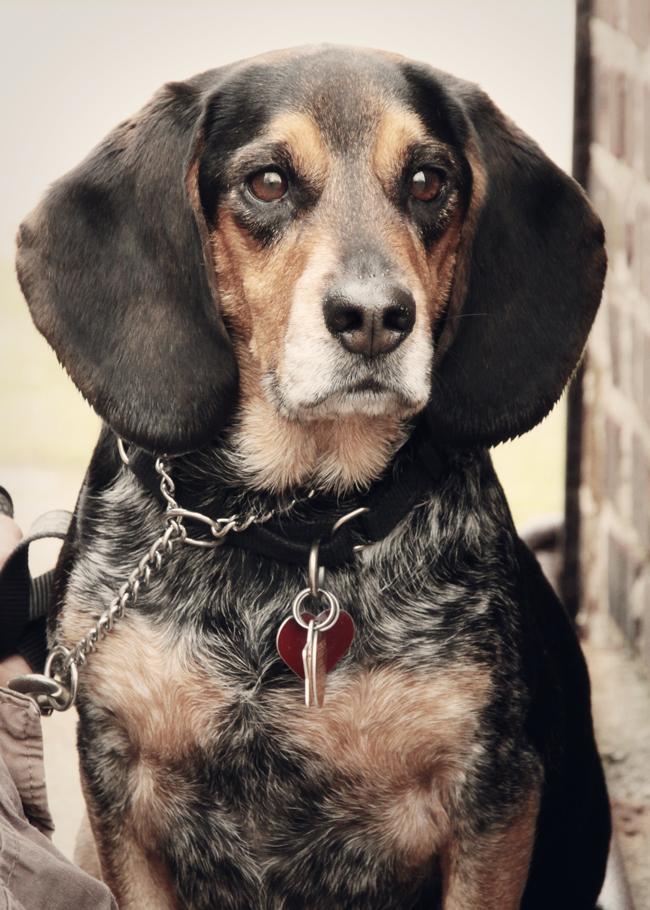 Dog-Photography-30