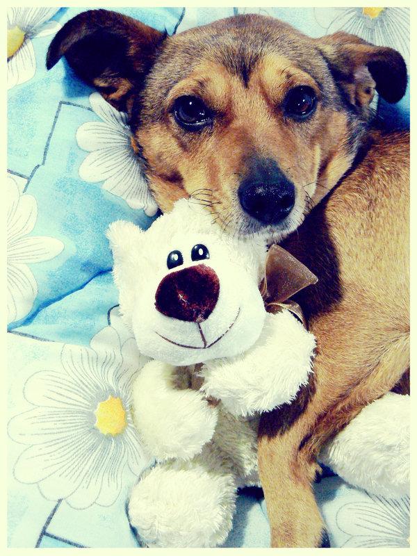Dog-Photography-33