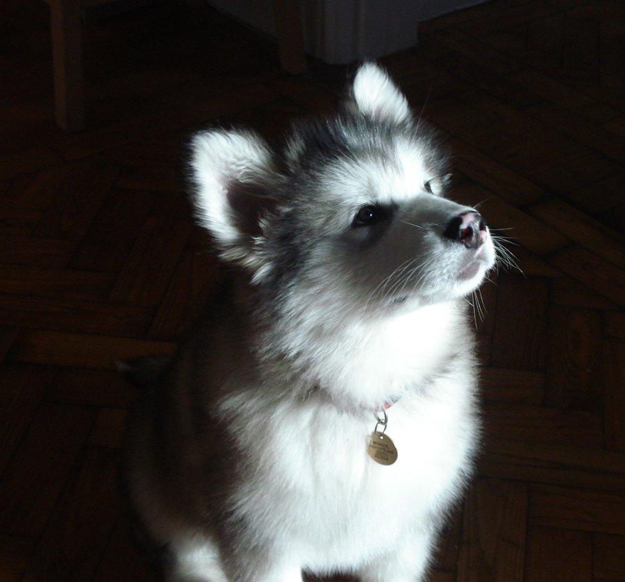 Dog-Photography-35