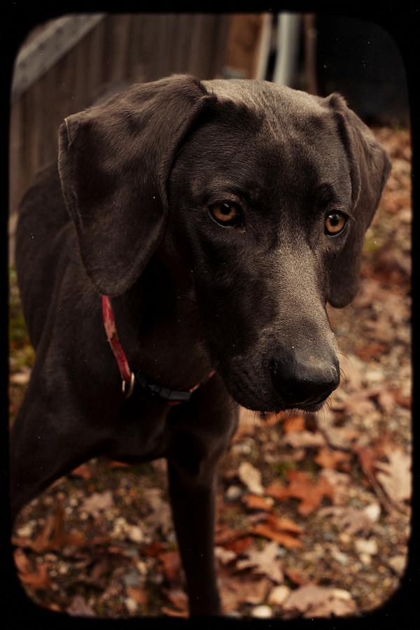Dog-Photography-36