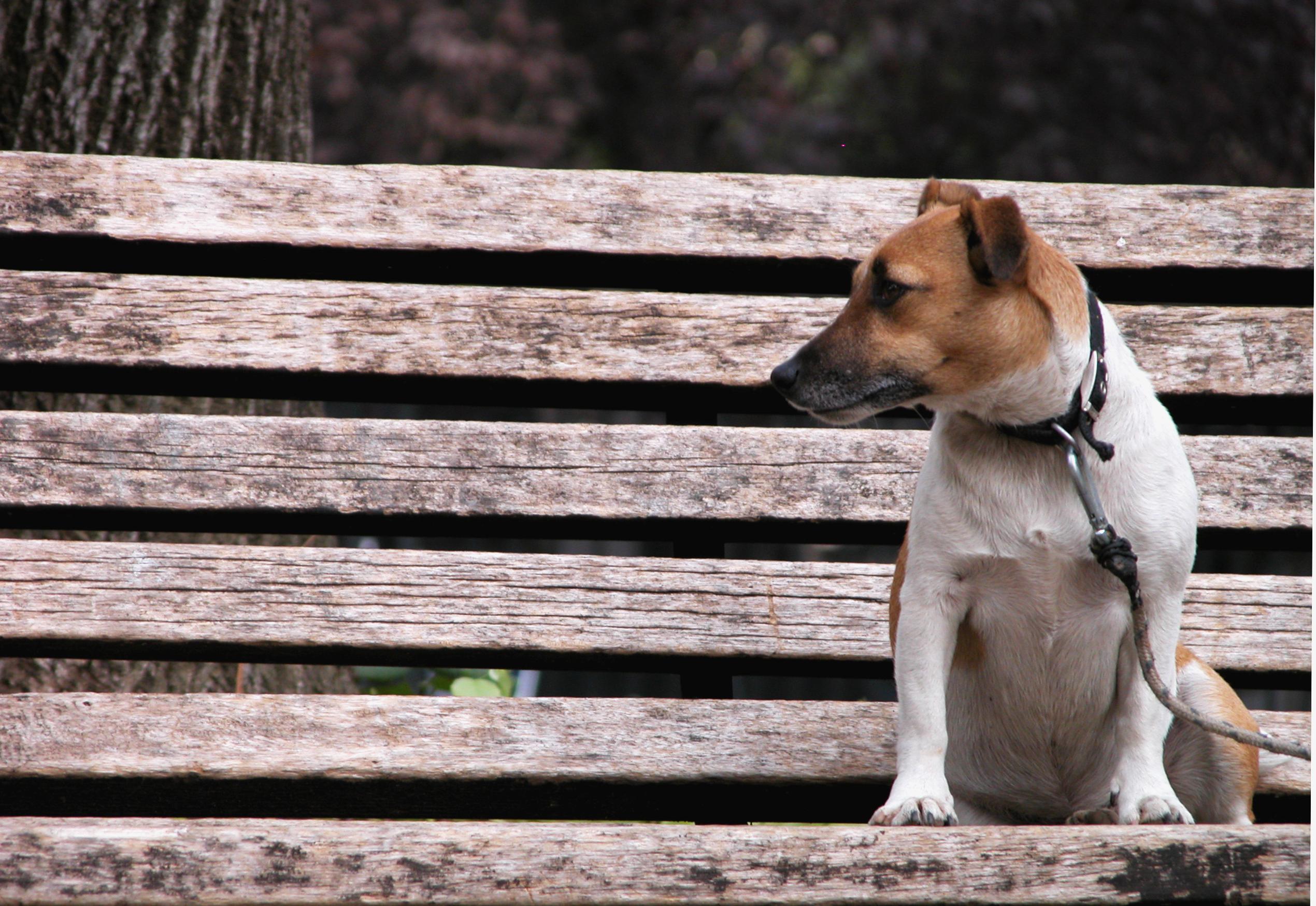 Dog-Photography-38