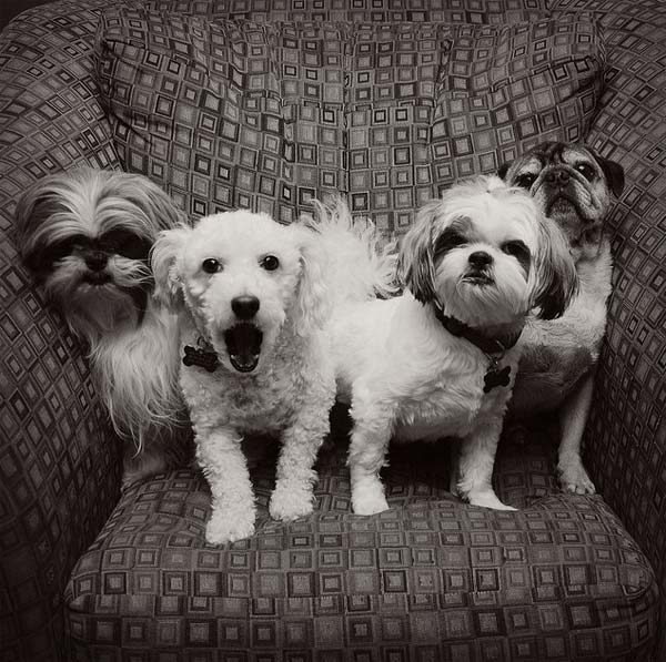 Dog-Photography-40