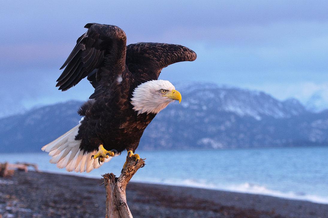 Eagle-Photos-01