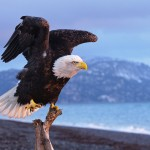 Save the Eagles – 28 Stunning Eagle Photos for Inspiration