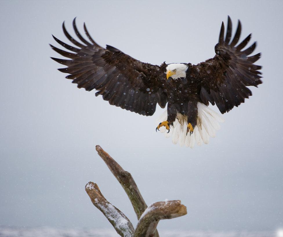 Eagle-Photos-02