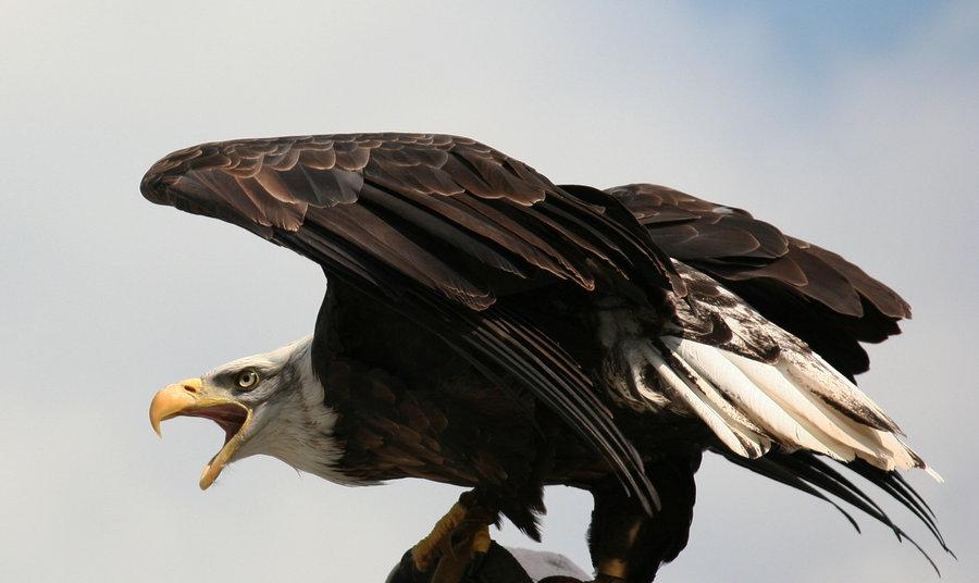 Eagle-Photos-03