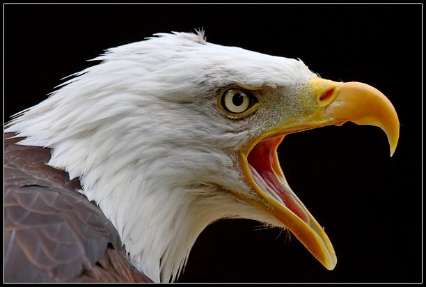 Eagle-Photos-04