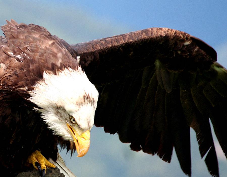 Eagle-Photos-05