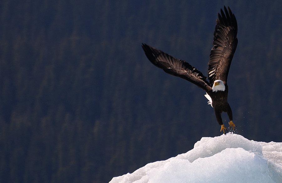 Eagle-Photos-06
