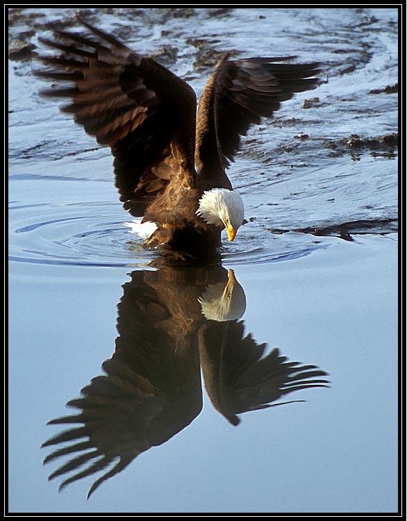 Eagle-Photos-07