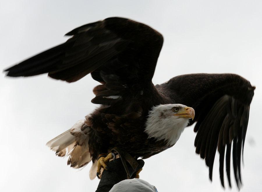 Eagle-Photos-09