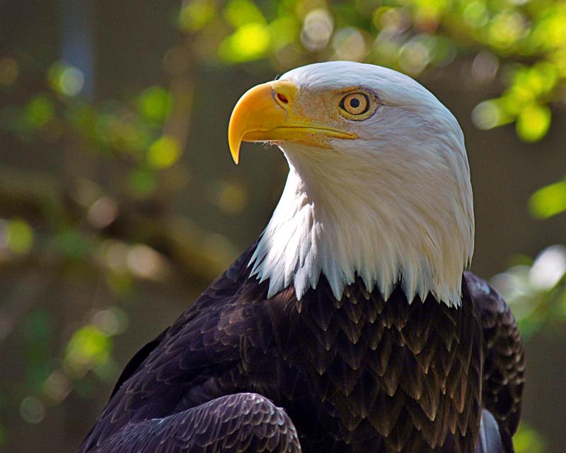 Eagle-Photos-10