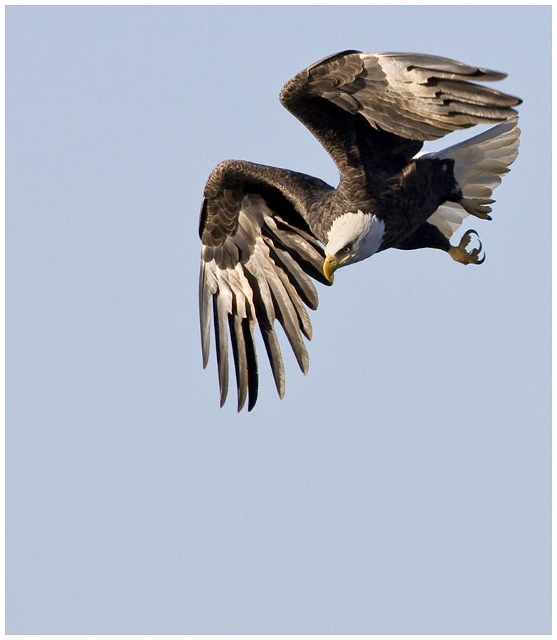 Eagle-Photos-12
