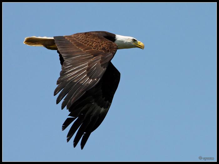Eagle-Photos-13