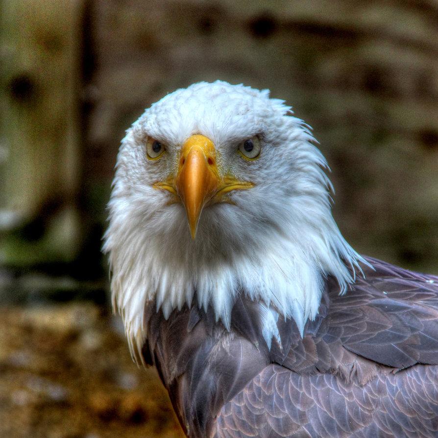 Eagle-Photos-14x