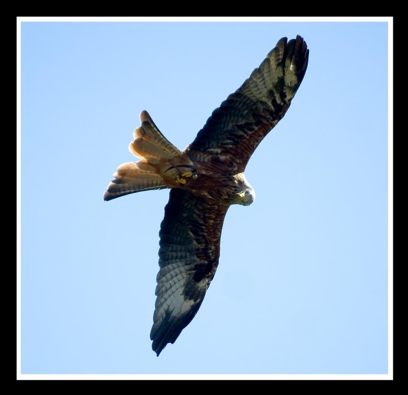Eagle-Photos-15
