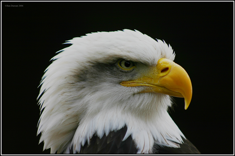 Eagle-Photos-16
