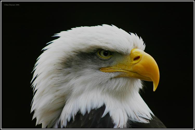 Eagle-Photos-16