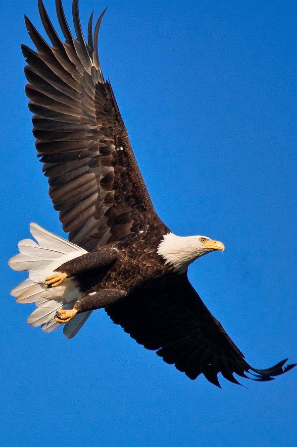 Eagle-Photos-18