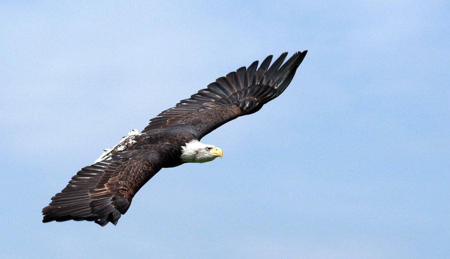 Eagle-Photos-19