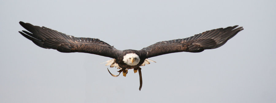 Eagle-Photos-20