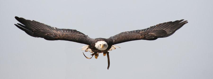 Eagle-Photos-20