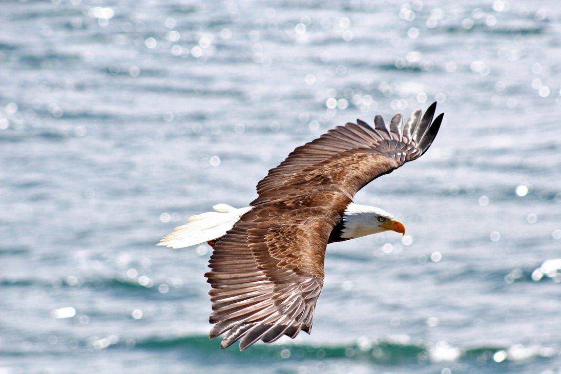 Eagle-Photos-21x